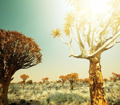 Fotomural Paisagens africanas