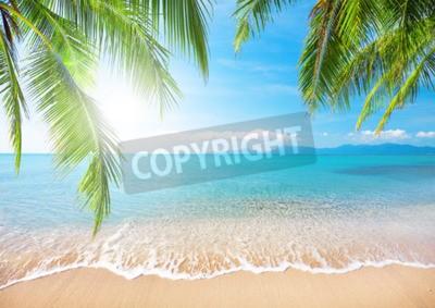 Fotomural Palm e praia tropical
