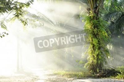 Fotomural Palm Fog Light Farm Day Outdoor