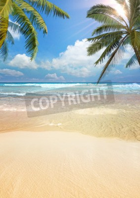 Fotomural Palma da praia