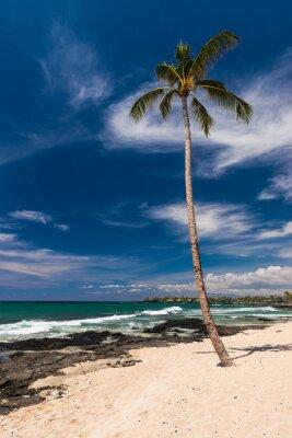 Fotomural Palmeira de coco em uma praia havaiana, Ilha Grande