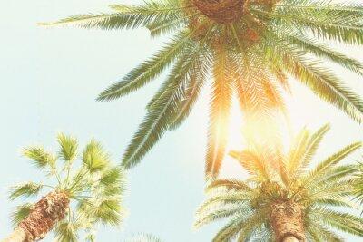 Fotomural Palmeira e sol