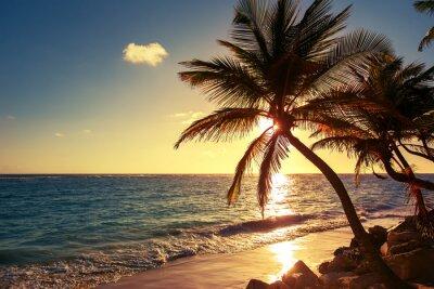 Fotomural Palmeira na praia tropical