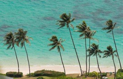 Fotomural Palmeiras na praia de Waimanalo, Havaí