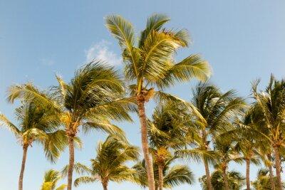 Fotomural Palmeiras no fundo de uma bela luz solar