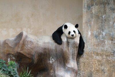 Fotomural panda urso de descanso