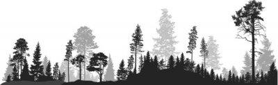 Fotomural panorama da floresta de árvores de abeto cinza alta em branco