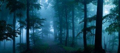 Fotomural Panorama da floresta nevoenta. Madeiras de vista assustadores do conto de fadas em um dia enevoado. Manhã nevoenta fria na floresta de terror