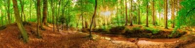 Fotomural Panorama de uma floresta idílica com riacho ao nascer do sol