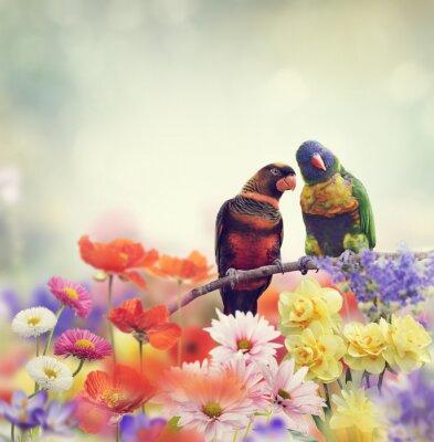 Fotomural Papagaios do arco-íris (arco-íris Lorikeet)