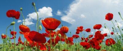 Fotomural papoila vermelha e nuvens