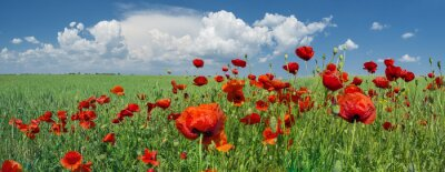 Fotomural Papoilas vermelhas e céu com nuvens