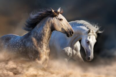Fotomural Par, cavalo, corrida, poeira, pôr do sol, luz