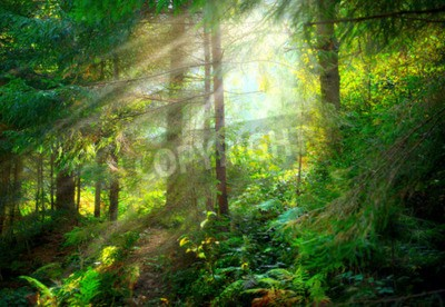 Fotomural Park. floresta velha enevoada bonita