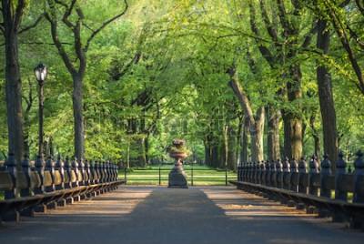 Fotomural Parque Central. Imagem da área de The Mall no Central Park, Nova York, EUA