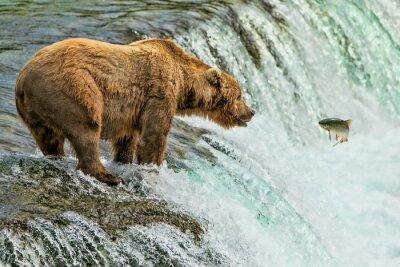 Fotomural Parque nacional Katmai do urso de urso Alaska