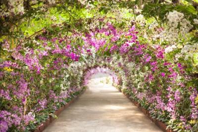 Fotomural passeio em um jardim botânico com as orquídeas que revestem o caminho.