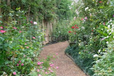 Fotomural Passeio no jardim botânico de rosas, - foto de acervo