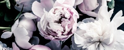 Fotomural Pastel peony flowers as floral art background, botanical flatlay and luxury branding design