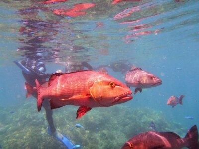Fotomural Peixes da grande barriga de recife