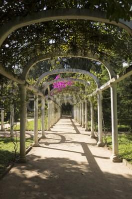 Fotomural Pergola arqueada bonita trajeto infinito no jardim botânico, Rio de Janeiro, Brasil
