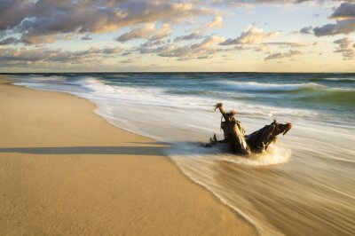 Fotomural Pien wyrzucony na Morska Plaze