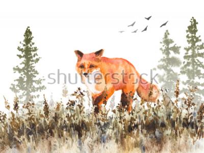 Fotomural Pintura aquarela. Mão desenhada ilustração animalesca. Raposa vermelha que anda no prado de desvanecimento. Cena do outono com movimento predador selvagem, abetos na nuvem e secada.