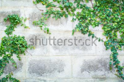 Fotomural Planta trepadeira verde em uma parede branca
