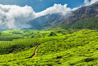 Fotomural Plantações de chá na Índia