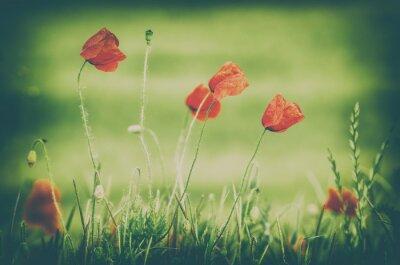 Fotomural Poppies à margem