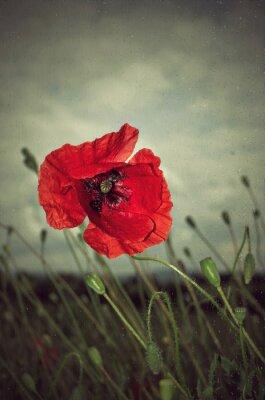 Fotomural Poppy in rain