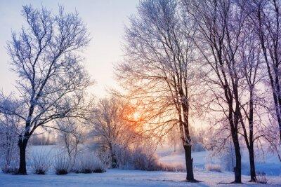 Fotomural pôr do sol de inverno