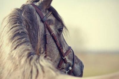 Fotomural Portrait of a sports stallion