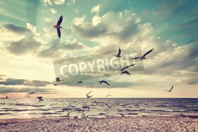 Fotomural Praia estilizado retro com os pássaros de vôo no por do sol.