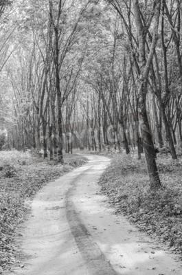 Fotomural Preto e branco do caminho para a floresta