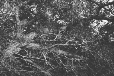 Fotomural Preto e branco perto acima em filiais leafless torcidos. Orgânico b