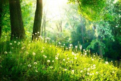 Fotomural Primavera Nature. Paisagem bonita. Grama verde e árvores