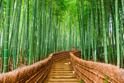 Fotomural Quioto, Japão Bamboo Forest