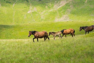 Fotomural Rebanho, cavalos, andar, ao longo, montanha, prado