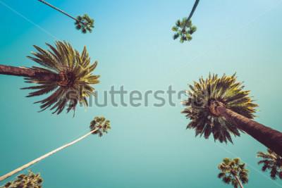 Fotomural Redeo Los Angeles Vintage Vintge Palmeiras - céu claro de verão