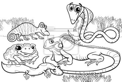 Repteis E Anfibios Para Colorir Fotomural Fotomurais Cobra