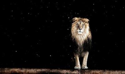 Fotomural Retrato de um leão bonito, padrão geométrico