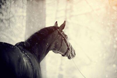 Fotomural Retrato, esportes, cavalo