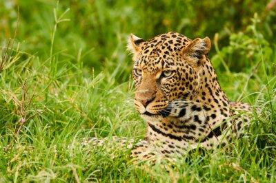 Fotomural Retrato fêmea do leopardo