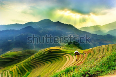 Fotomural Rice fields on terraced of Mu Cang Chai, YenBai, Vietnam. Vietnam landscapes.