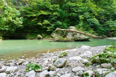 Fotomural Rio de montanha no Cáucaso perto de Sochi