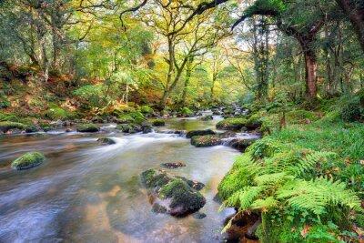Fotomural Rio Floresta Mágica