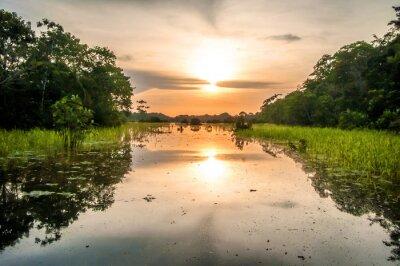 Fotomural Rio na floresta amazônica no crepúsculo, Peru, Ámérica do Sul