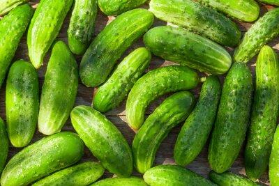 Fotomural Ripe cucumbers
