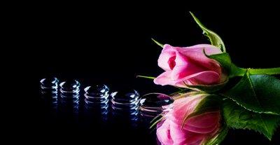 Fotomural Rosa e gotas